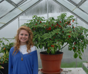 Emily Martin at Sea Spring Seeds with a Dorset Naga plant