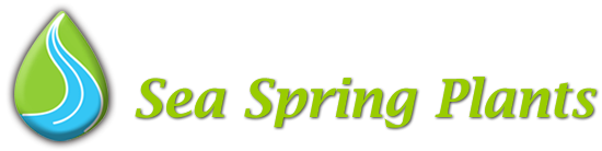 Sea Spring Plants