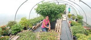 Nigel, a giant Dorset Naga plant